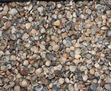 Schone schelpen vind je bij Totaal Bestrating Drachten Friesland